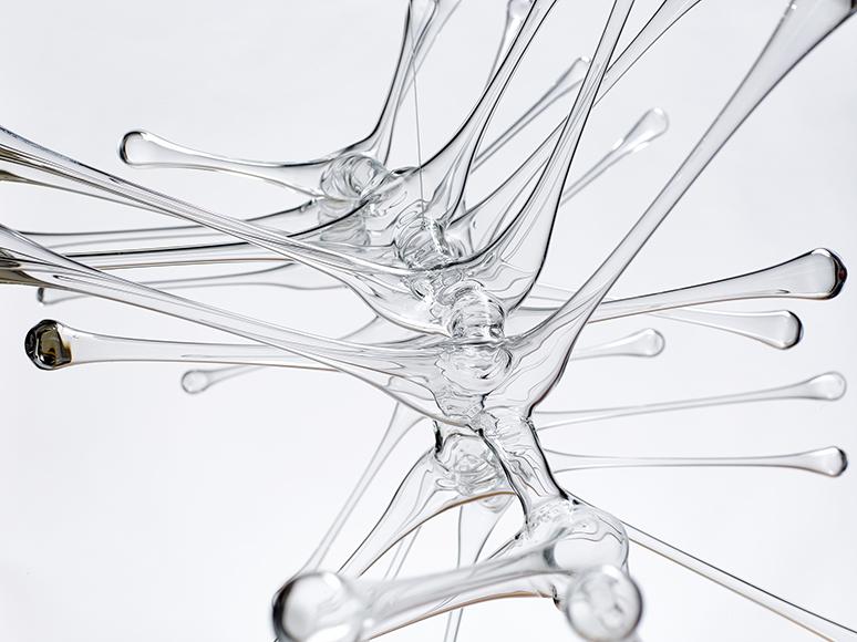 Phytoplanton 3b (2014) Foto: Dietmar Klingenburg