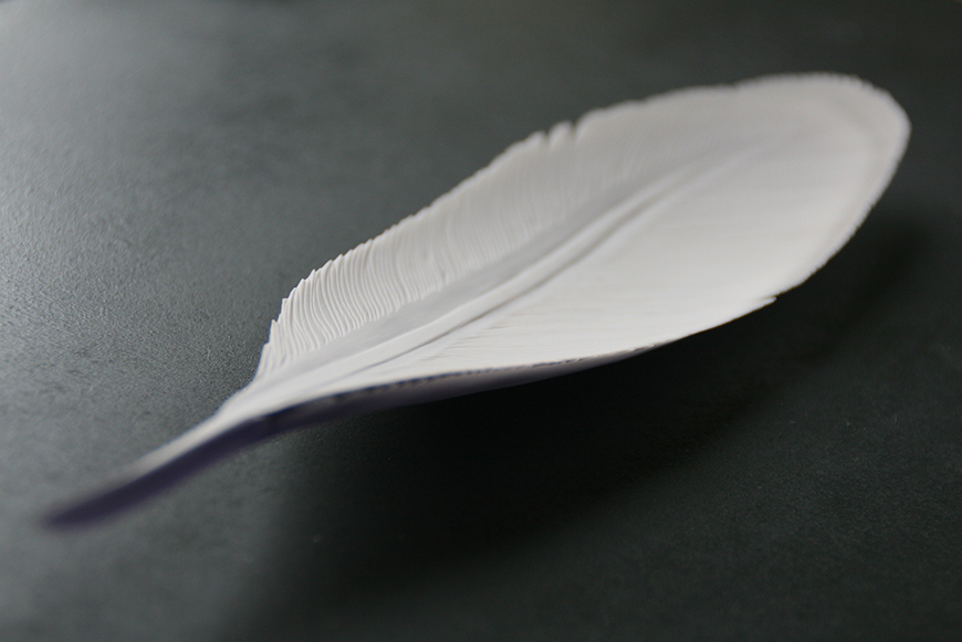 Feather (2015)